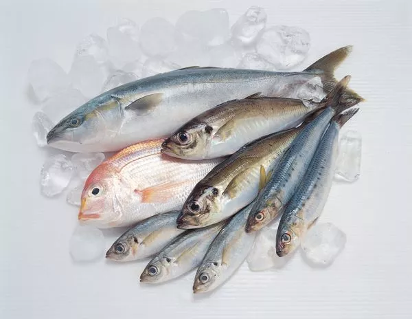 Eating fish is good for the body and has gained approval from most people. Fish is rich in Omega-3 and Omega-6 fatty acids, helping to improve cognitive health, reduce the risk of heart disease, and lower blood pressure. However, a new study shows that th